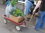 300x225xwagon-with-plants-small.jpg.pagespeed.ic.l-4c0L7p6Z