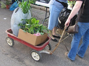 wagon with plants small