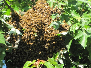 bee swarm 4 small