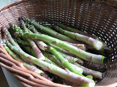 asparagas just picked small