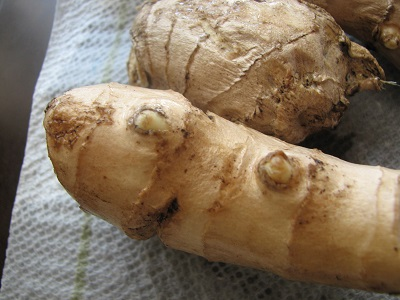 ginger root eyes